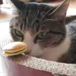 さあどうなる??猫ちゃんの目の前にミニどら焼きを置いてみました・・・!