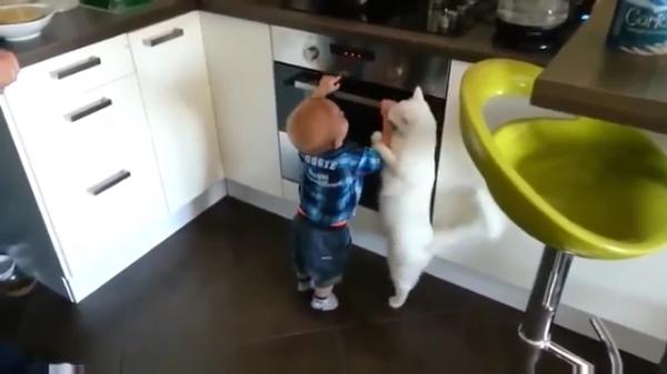 心配性の優しい猫ちゃん。オーブンを開けようとする子供の手をギュッと押さえて「危ないからダメよ」と注意する。