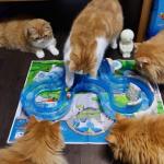 モフモフのマンチカンちゃん達のおうちに新しいおもちゃが届いたー!おもちゃの魚は捕まえられるかな?