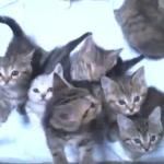 こんな子猫たちにかこまれたい♡鳴き声が可愛すぎ(*´艸`*)