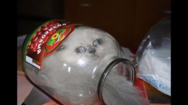 どうしてこうなった( ゚д゚)ピンチに陥ったネコたちがおもしろカワイイ♪