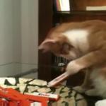 チョコレートを盗む猫ちゃん!器用にお皿の中から片手だけでゲット・・・!
