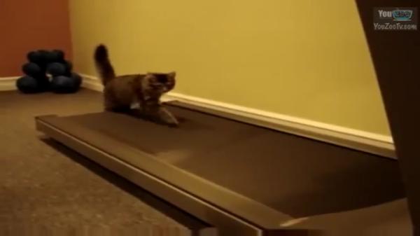 gatti c1