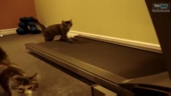 gatto c10
