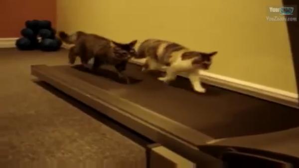 gatto c4