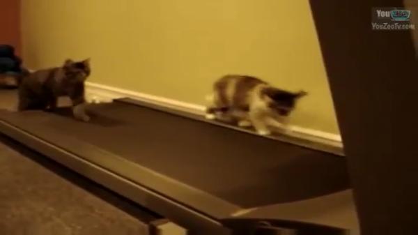 gatto c6