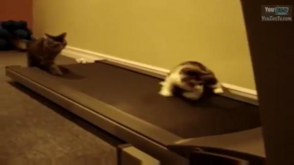 gatto c7