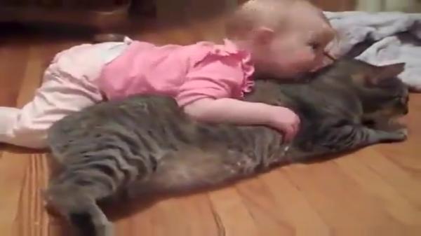 ベビーシッターの猫ちゃんがだあああい好きで仕方ない赤ちゃん♡ポチャめの猫ちゃんをギュ!「一緒に居ようよー♡」