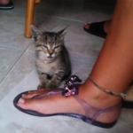 うとうと・・・ガクン!「ね、寝てないよ!」飼い主さんの足の上にチョコンと座り眠気と戦う子猫ちゃんがかわいすぎる♡