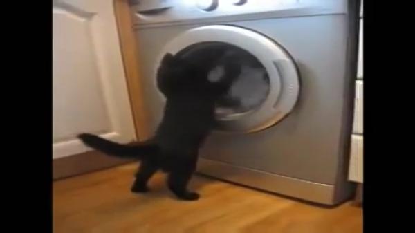 ドラム式洗濯機VSニャンコ!「黙って見てられにゃい!」回転する洗濯物をどうしても止めたい!