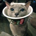 【笑える♡】カップ麺のカップのエリザベスカラーが以外に便利!