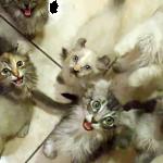 いち、に、さん、し・・・一体何匹いるの!?数えきれない!!お腹が空いたモフモフ猫ちゃんたちの大合唱!!