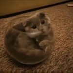 小さなガラスボールの中に入っちゃった子猫ちゃん。「このフィット感が落ち着くんだニャン♡」