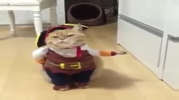 表情に注目!完全に海賊になりきっているフック船長がめちゃくちゃかわいい♡