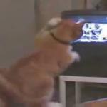 【熱血応援】TVでボクシング観戦する猫!自分も猫パンチ炸裂!!「そこ!左ストレート!構えが甘いにゃ~」【爆笑】