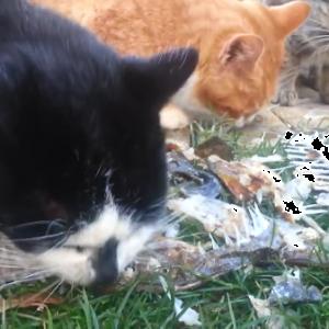 魚大好き!8匹の腹ペコ猫ちゃんたち!魚の骨を見てみんなで大興奮!!