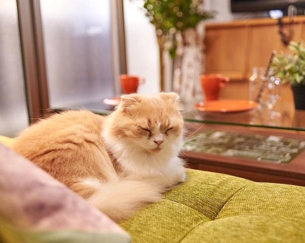 【猫好きの女性必見!!】猫ちゃんと暮らせる「ねこシェハウス」が続々誕生♪