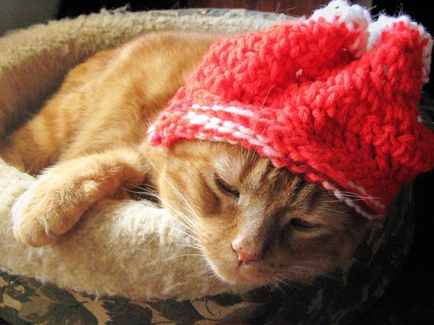 1461619_Cat-in-a-Knit-Hat_620