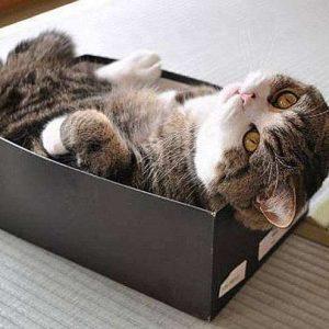 【飼い主さんなら納得!!】思わずうなずける、可愛すぎる猫あるある20選