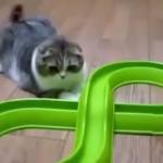猫VSおもちゃ!夢中になりすぎておもちゃに遊ばれている猫♪