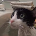 珍しい!(・o・)お風呂が大好きな猫の入浴シーン♡