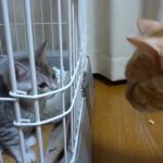 喧嘩しないで(ToT)先輩猫と新入り猫が威嚇しあう修羅場 ((((;゜Д゜)))