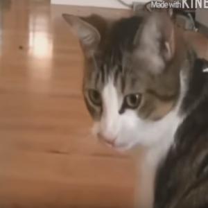 大爆笑!世界の猫のおバカなおもしろ映像集♪