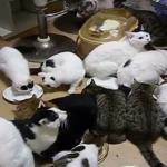 まさにカオス(笑)大家族猫の食事風景とは(´゚д゚`)