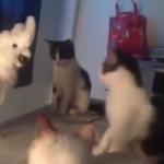 「え・・・きみも、猫なの?」疑いを隠せない三匹の猫ちゃんと「ミャア」と鳴くオウム。