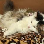 子ザルのお守りをする猫ちゃん。いつも背中にのせて一緒に行動♡
