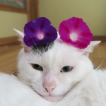 ファッション猫。耳の上に2色の朝顔をのせてとってもオシャレなにゃんこ♡