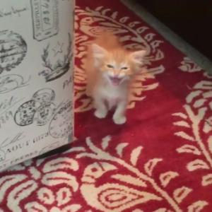 お腹が空いた子猫ちゃんのごはんをおねだりする声♡が激カワ・・・!!!