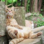 切り株にデーンと男前に腰かける猫!マイナスイオンを浴びて休憩中の様子。
