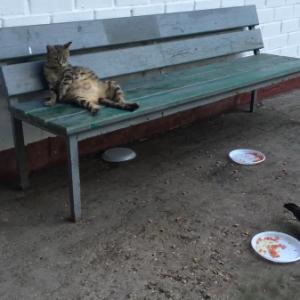 お腹いっぱいで動けない・・・(´・ω・`)目の前で鳩が自分の餌のお残しを食べているけど、座って見てるだけ(笑)