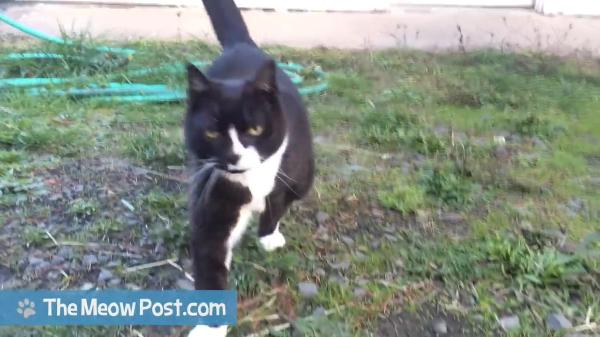 25歳の長寿猫!!見た目は若いけど鳴き声を聞くと年齢がわかる!?おじいちゃん声の猫!