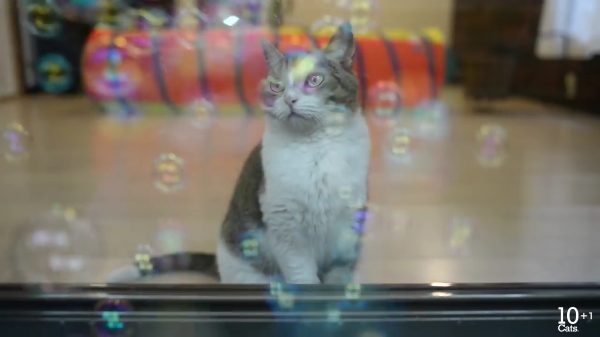たくさん飛ぶシャボン玉を何とかして捕まえたい猫ちゃんたち♡