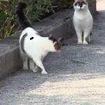 猫を猫がストーカー・・・??その様子がまるで「だるまさんが転んだ」をしている様で爆笑