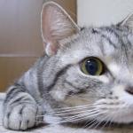 何かを真剣に観る猫の表情が可愛いい♪目をキョロキョロ・ω・