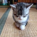 フラフラ揺れながらも、寝るものか!と睡魔と戦う子猫ちゃん♡でもやっぱり寝落ちしちゃった・・・!