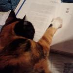 宿題を助けるカテキョ猫。参考書の序章から真剣に読むべきだとなかなかページをめくらせてくれない・・・