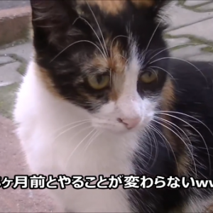 感動!5ヶ月ぶりに再会した猫と犬の様子が泣ける(´Д⊂ヽ