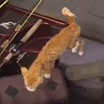 【海外映像】泳いでいる子猫を保護!猫って泳げるんだ~!?