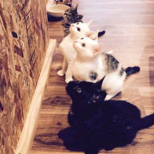 【殺処分0を目指す旅館】山口県のてしま旅館に保護猫を預かる「猫庭」完成!!