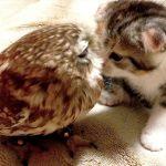 【猫とふくろうの仲良しコンビ】まりもとフクは今どうしてる?