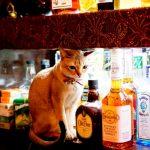 【猫ホステスがいるバー】その名も「Bar 猫」☆