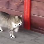 スキップらんらん♪ノリノリな感じで歩く猫がおもしろ可愛い♫