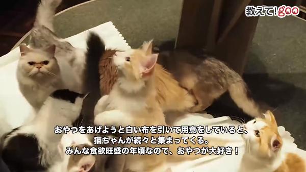 かわいい子猫たちといっぱい触れ合う♪ネコカフェに行ってみよう(^^)/