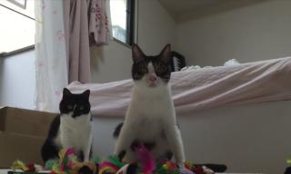 いっぱいありすぎるニャン(-_-;)猫にたくさんおもちゃをあげてみたらそうなるか試してみた