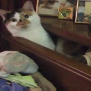 これは参った!タンスの中の下着を全部ひっくり出して、自分の寝床を作る猫ちゃん(笑)