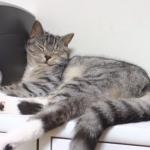 【ねむねむ動画】よく寝たニャン♪猫の寝起きの何気ない行動がめちゃくちゃカワ(・∀・)イイ!!♪